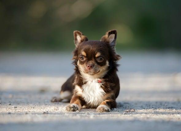 ¿Pueden los perros ser alérgicos al césped?