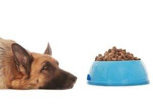Envenenamiento por Aspirina en Perros