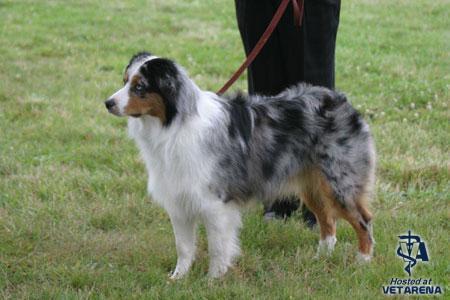 Obstrucción de las vías biliares en los perros
