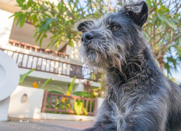 Estreñimiento (Severo) en Perros