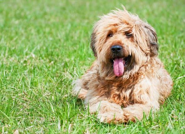 Envenenamiento por etanol en perros