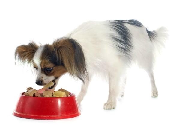 Reacciones dietéticas en los perros