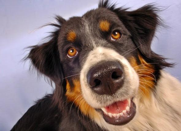 Miedo y ansiedad extremos en los perros
