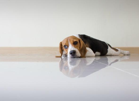 Exceso de magnesio en la sangre de los perros