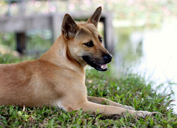 Excessive Blood Clotting in Dogs