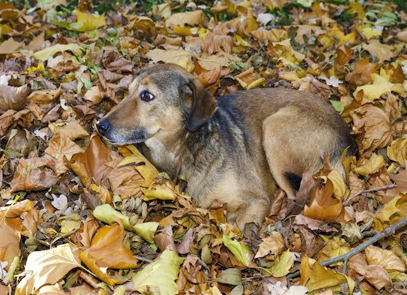Identificación y tratamiento de las tenias en los perros