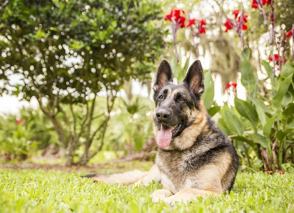 La presión arterial alta en los perros