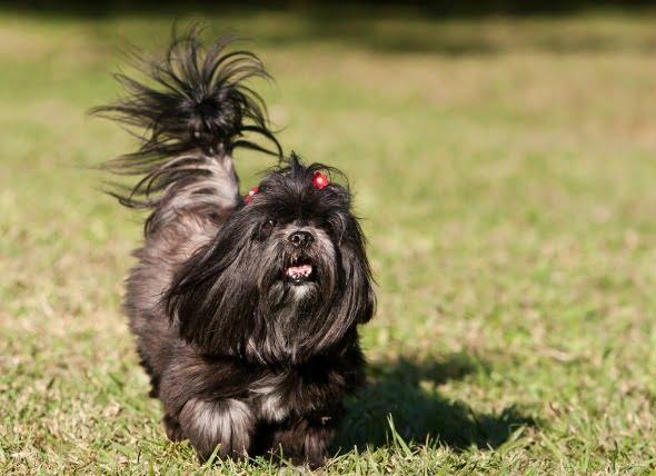 Latidos irregulares en los perros