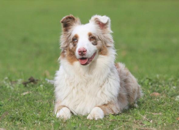 Pérdida de audición en los perros
