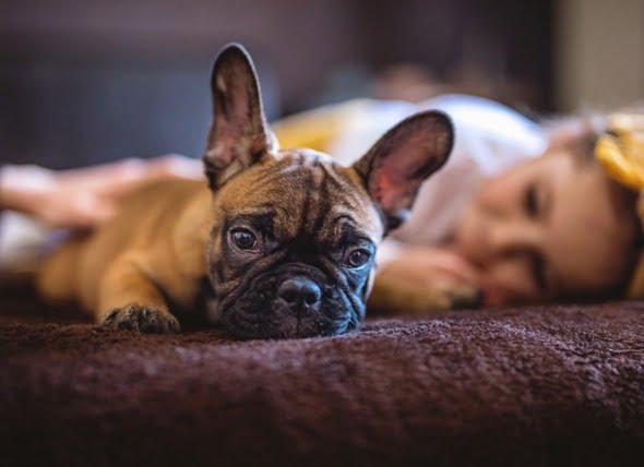 Toxicidad del ibuprofeno en perros