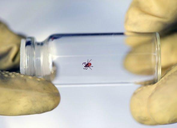 ¿Dónde son las poblaciones de pulgas y garrapatas las peores?