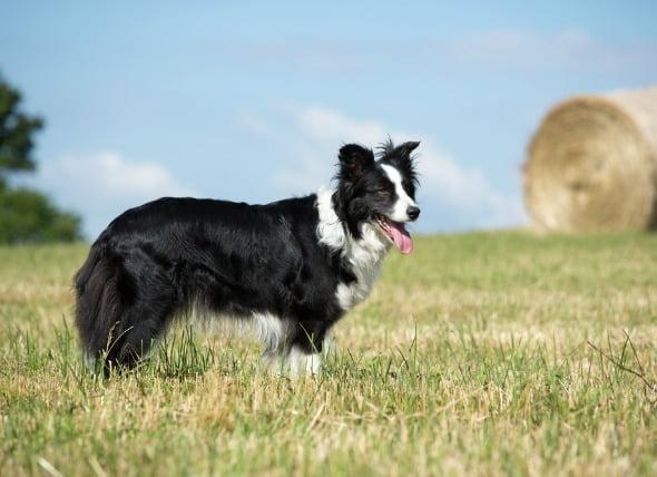 Parálisis por lesión de la médula espinal en perros