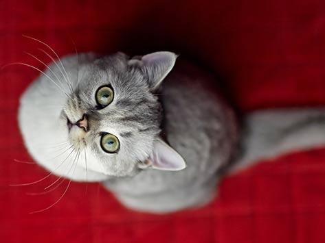 5 razones por las que tu gato está orinando en la cama