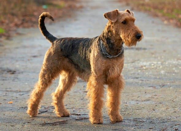 Cáncer de páncreas (adenocarcinoma) en perros