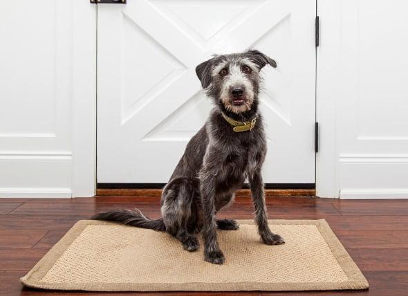 Carcinoma de células de transición del tracto urinario en perros
