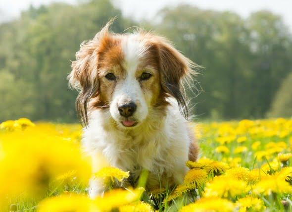 Efectos secundarios de los medicamentos para la ansiedad en los perros