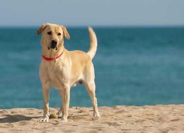 Erosión del cartílago de las articulaciones en los perros