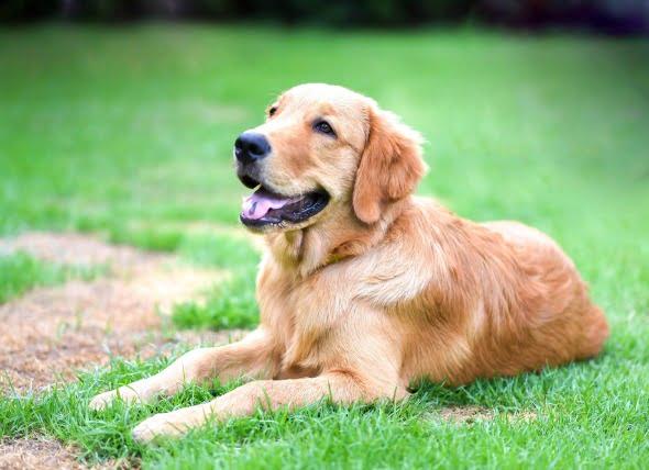Erupción de la piel debido al contacto con irritantes en los perros