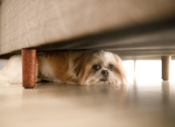 Fobias a las tormentas eléctricas en los perros