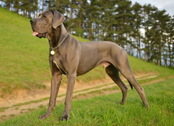 Inflamación de los discos vertebrales en los perros