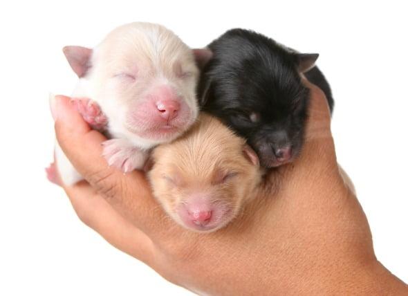 Inflamación de los ganglios linfáticos (linfadenitis) en perros