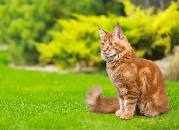 Medicina para pulgas y garrapatas Envenenamiento en gatos