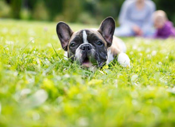 Mucosidad en la caca de perro: Causas y tratamiento