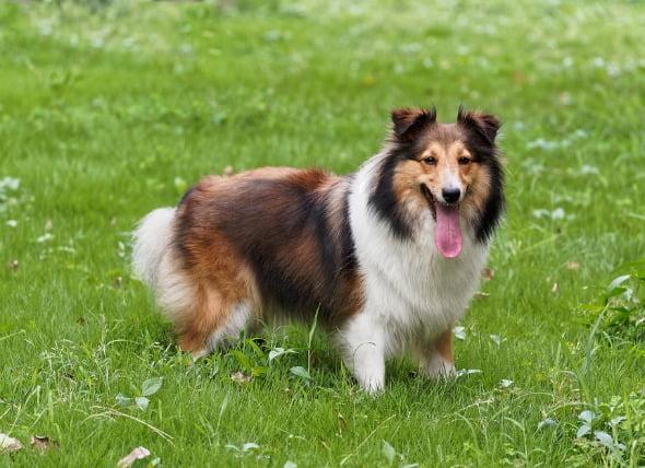 Trastorno de la médula espinal causado por el bloqueo de un vaso sanguíneo en los perros