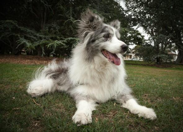 Tumores en el hígado de los perros mayores