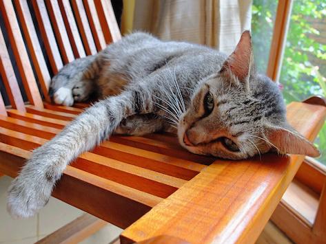 Cómo tratar el síndrome de vómito biliar en los gatos