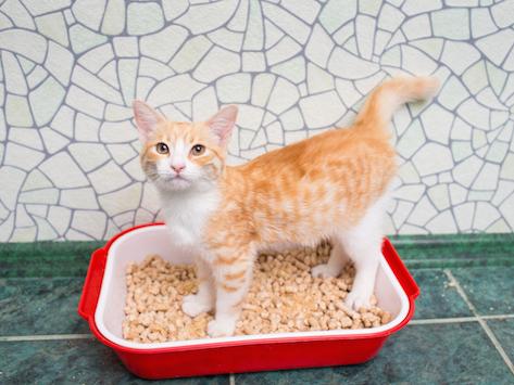 Cómo tratar la hematuria en los gatos