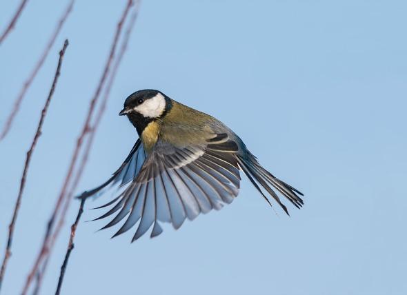 Enfermedades bacterianas en las aves