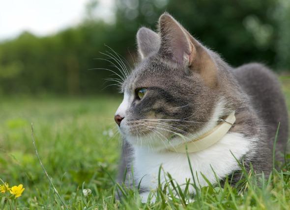 Incapacidad de orinar en los gatos