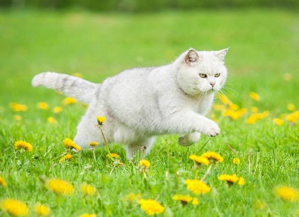 Infección bacteriana (micoplasma, ureaplasma, acopleplasma) en gatos