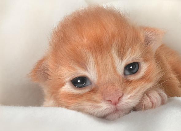 Infección ocular en gatos recién nacidos