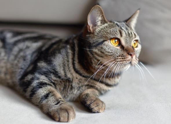 Resorción dental en gatos