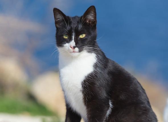 Síndrome del ojo seco en los gatos