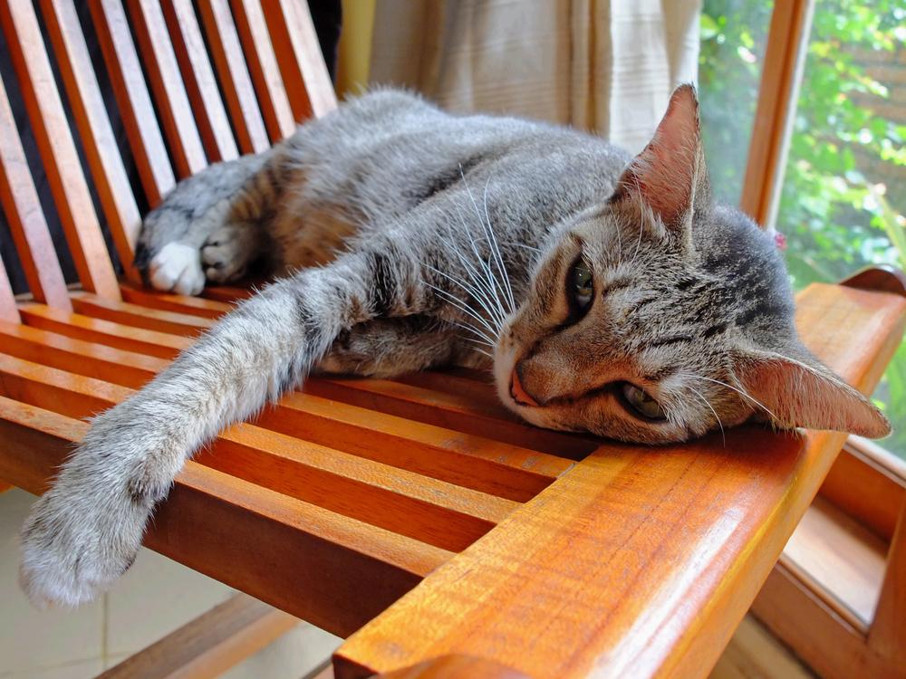 Toxicidad de los insecticidas en los gatos