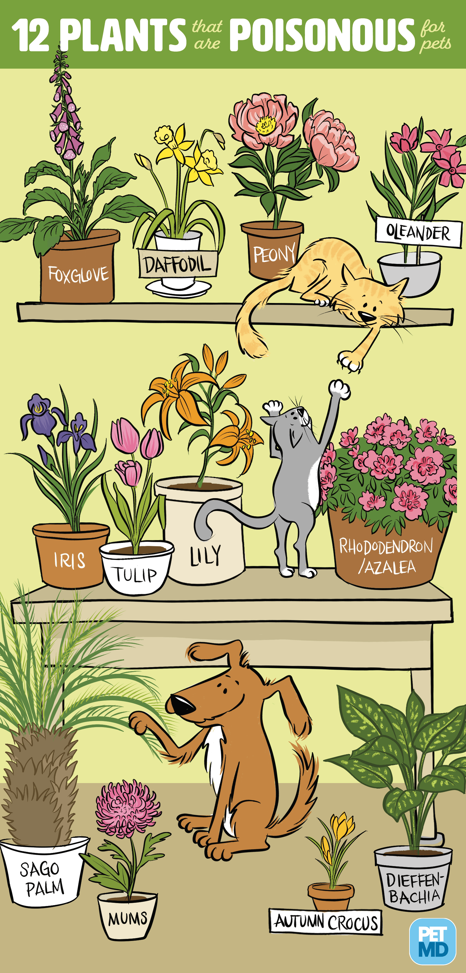 12 plantas venenosas para perros y gatos