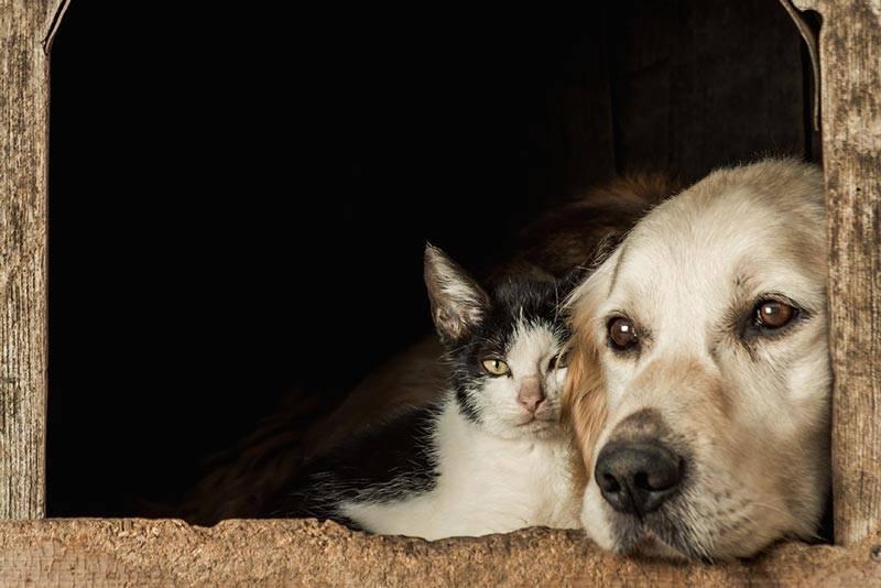 Vómitos del perro: Cuándo debe preocuparse